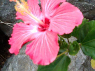 沖縄の花達