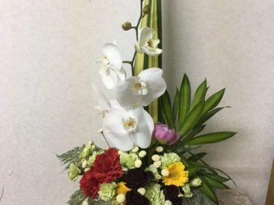 胡蝶蘭のデザイン